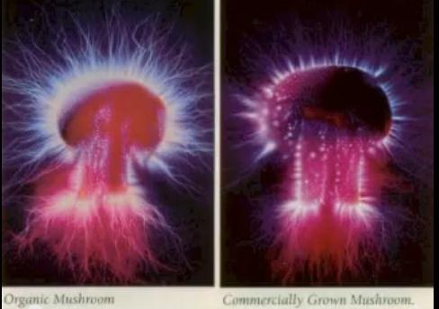 An Organic Mushroom's Energy Field